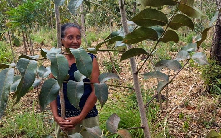 Limay-project-CommuniTree-reforestation